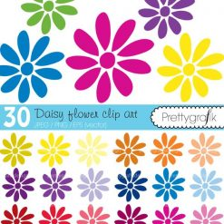 Flower daisy clipart